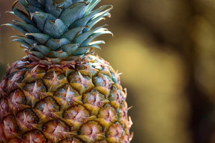 https://pixabay.com/de/photos/ananas-s%C3%BCdfrucht-obst-frucht-4044698/