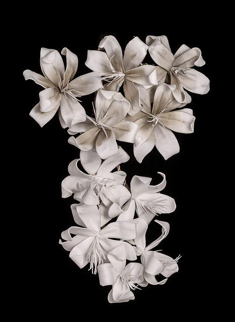 white-flower-1258319_640