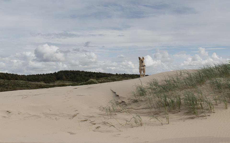 dune-842453_960_720