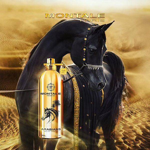 Montale – Arabians