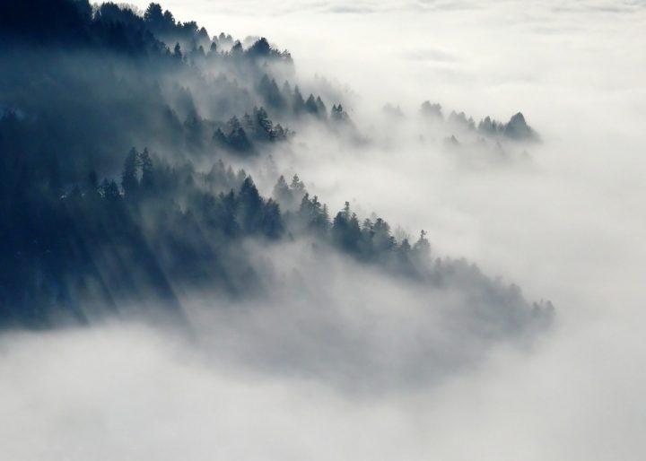 https://cdn.pixabay.com/photo/2014/11/27/10/29/forest-547363_960_720.jpg