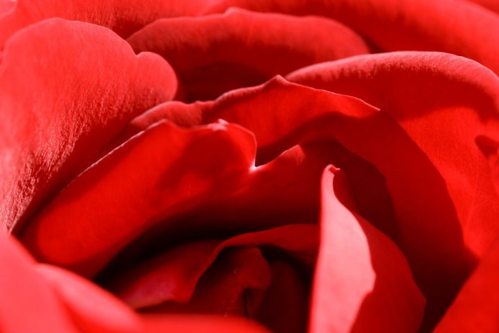 https://pixabay.com/de/photos/rose-rot-blume-romantik-liebe-460893/