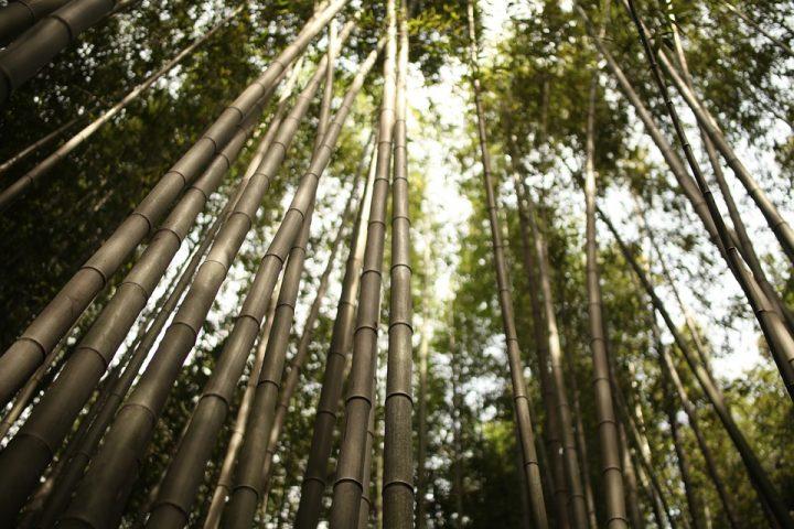 https://pixabay.com/de/photos/arashiyama-bambus-japan-gr%C3%BCn-kyoto-3571310/