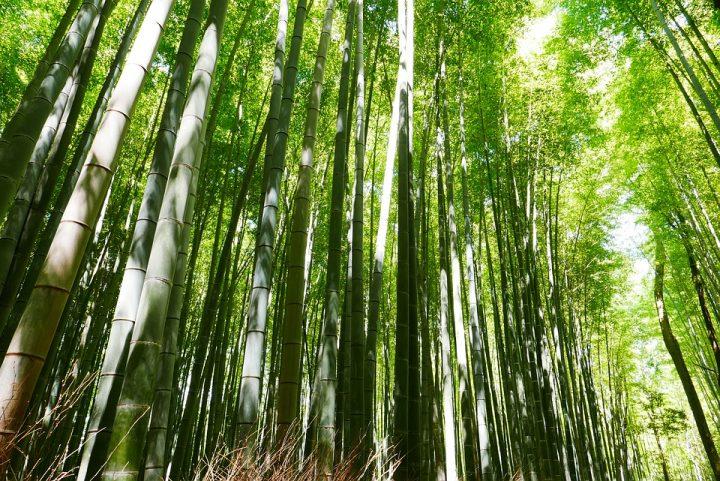 https://pixabay.com/de/photos/bambus-japan-kyoto-green-2074751/