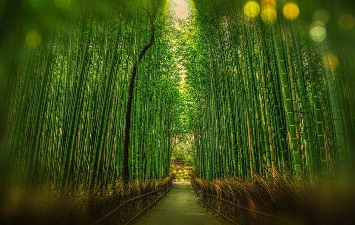 https://pixabay.com/de/photos/kyoto-japan-bambus-bokeh-abenteuer-1860521/