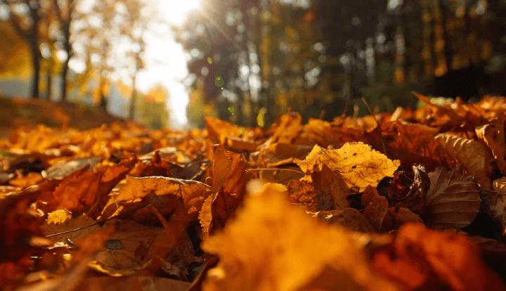 https://pixabay.com/de/photos/indian-summer-gegenlicht-bl%C3%A4tter-3951083/