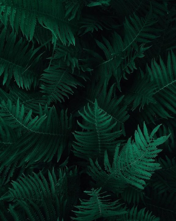 https://www.pexels.com/photo/photo-of-green-fern-leaves-1687341/