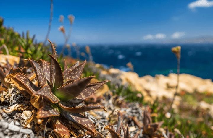 https://pixabay.com/photos/nature-summer-sky-travel-corsica-3188718/