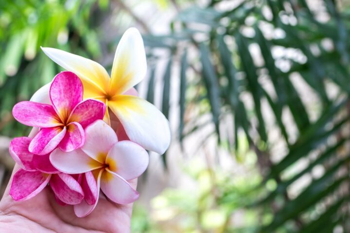 https://www.pexels.com/photo/bali-beautiful-beauty-bloom-433539/