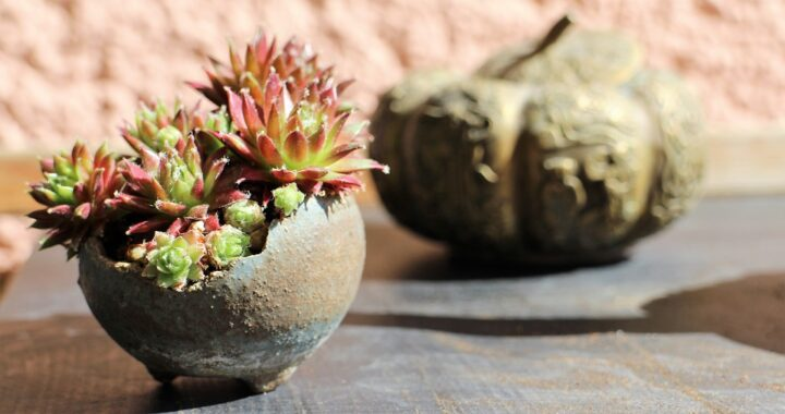 https://pixabay.com/de/photos/bonsai-kusamono-beisteller-2440114/
