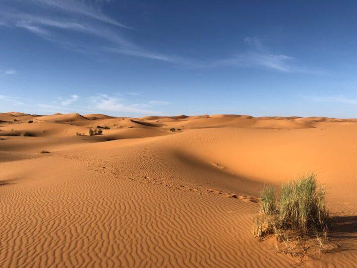 https://www.pexels.com/photo/green-grasses-on-sahara-desert-1001435/