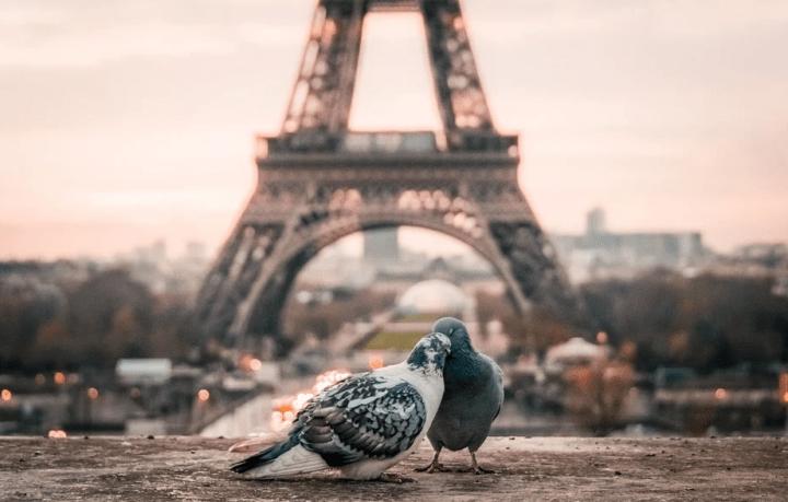 https://pixabay.com/de/photos/vogel-paar-schnabel-paris-2590901/