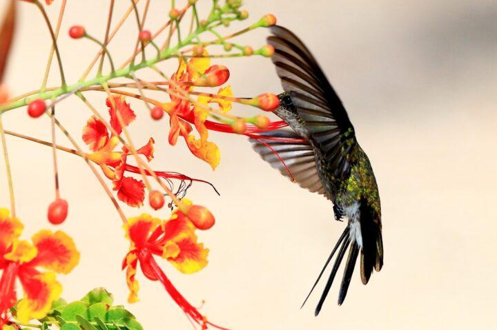 https://pixabay.com/de/photos/kolibri-hummingbird-cuba-wildlife-1858416/