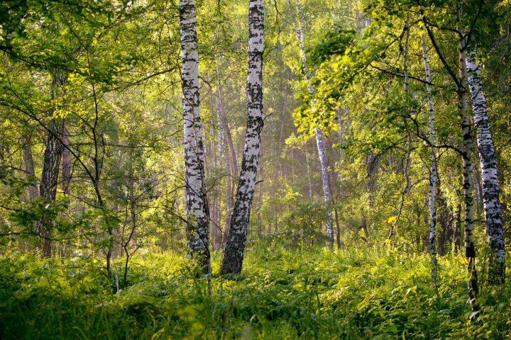 https://pixabay.com/de/photos/sommer-landschaft-hintergrund-dawn-2913409/