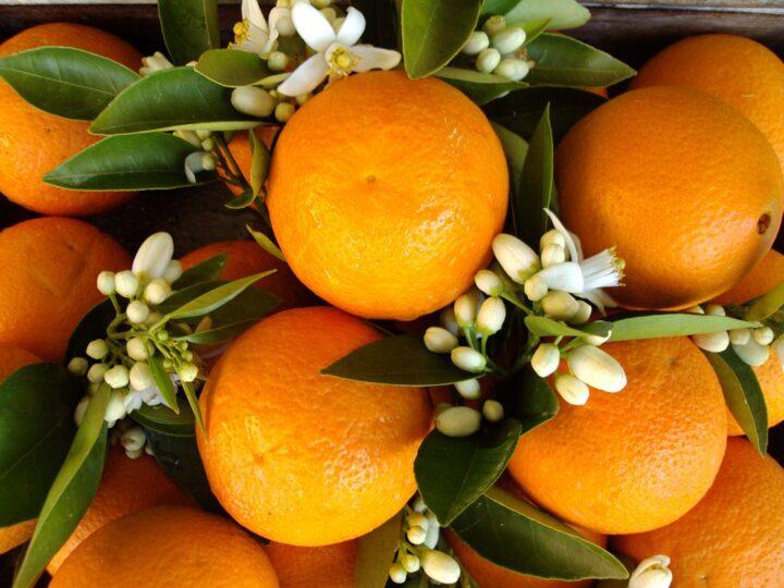 https://pixabay.com/de/photos/antalya-orange-orange-blossom-180725/