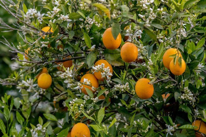 https://pixabay.com/de/photos/blume-orange-blossom-blumen-sommer-4909695/
