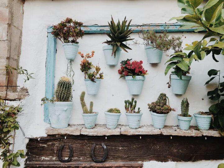 https://www.pexels.com/photo/plants-in-pot-on-wall-2431830/