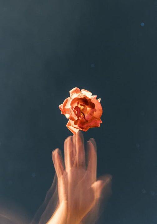https://www.pexels.com/photo/orange-petaled-flower-2512388/