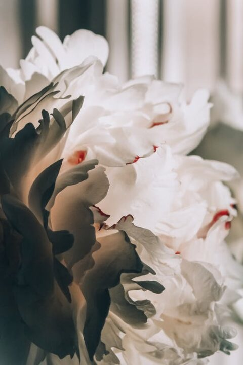https://www.pexels.com/photo/white-flowers-2524815/
