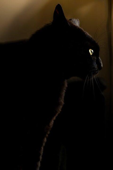 https://www.pexels.com/photo/night-animal-pet-eyes-2614/