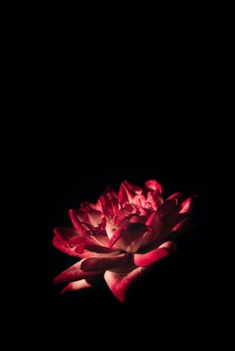 https://www.pexels.com/photo/red-flower-1671643/