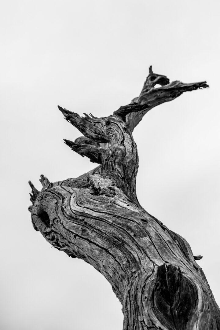 Baumstamm in Schwarz-Weiß